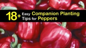 Companion Planting Peppers titleimg1