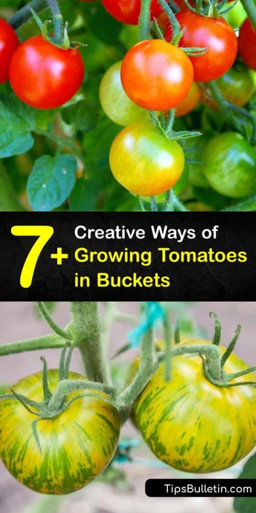 Find out how to use 5-gallon buckets for container gardening to grow cherry tomatoes. Enhance your garden soil or potting mix with calcium, potassium, phosphorus, and other important nutrients to promote a healthy root system. #growing #tomatoes #buckets #howto