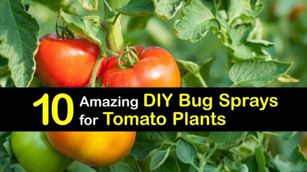 Homemade Bug Spray for Tomato Plants titleimg1