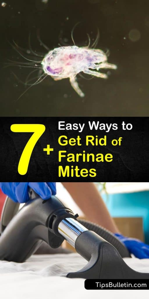 Reduce your allergic reactions like sneezing by eliminating house dust mites. Washing your pillowcases and other washable items with hot water kill farinae mites. Another way to cure a dust mite allergy is to use a HEPA filter on your dehumidifier. #howto #getridof #dust #mites #farinae
