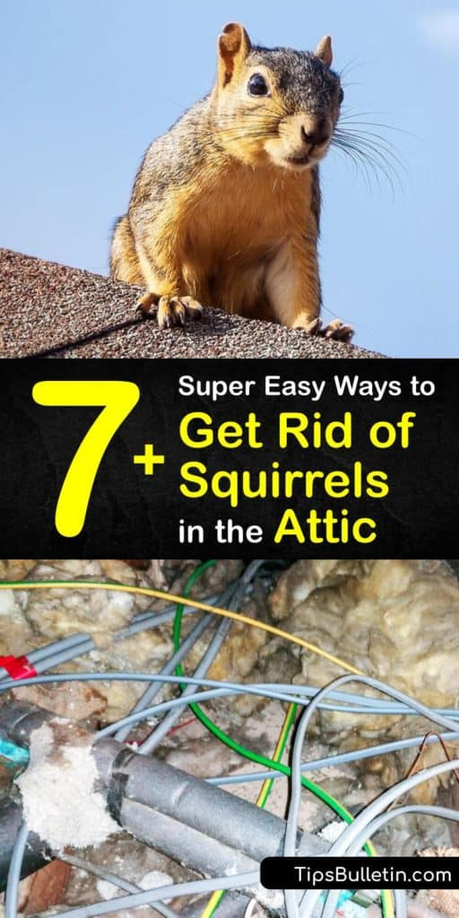 Learn how to get squirrels out of your attic crawlspaces using a trap, squirrel repellent, and pest control. Not only does this critter cause damage to bird feeders, but they climb tree branches and eaves into attics. #getridof #squirrel #attic
