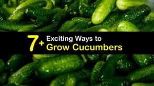 How to Grow Cucumbers titleimg1