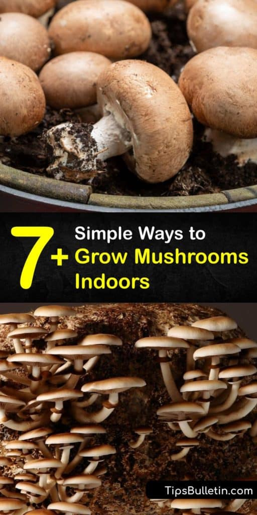 Start growing mushrooms indoors and snack on your favorite fruiting fungi like shiitake and oyster mushrooms. This growers guide helps you choose a growing medium, like hardwood sawdust, purchase mushroom spawn, and mix it with substrate to start growing mushrooms inside. #grow #mushrooms #indoors