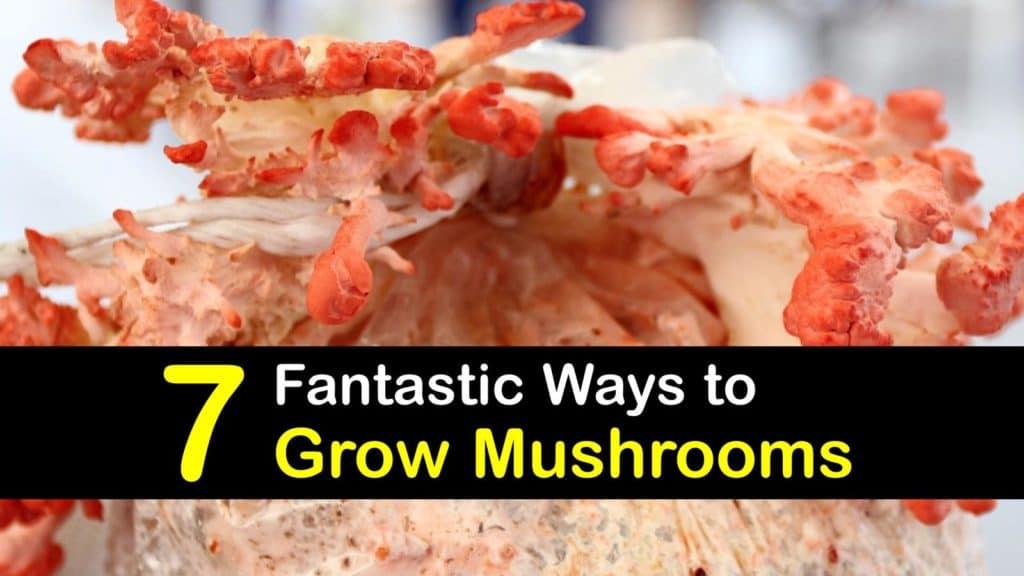 How to Grow Mushrooms titleimg1