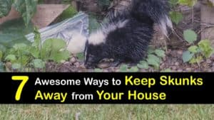 How to Keep Skunks Away from Your House titleimg1
