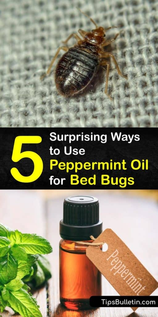 Learn to use essential oils like peppermint and eucalyptus as a natural repellent and insecticide for bed bug control. Avoid harsh chemicals and pesticides in your home to get rid of a bed bug infestation. Peppermint oil is great at repelling bed bugs. #repel #bedbugs #peppermint #oil
