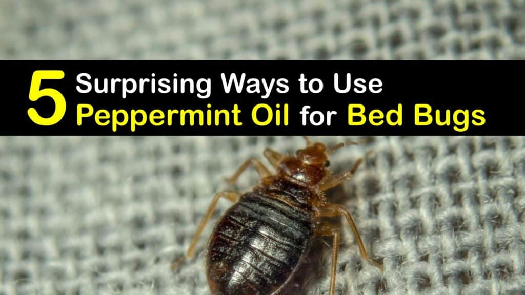 How to use Peppermint Oil for Bed Bugs titleimg1