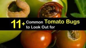 Tomato Bugs titleimg1
