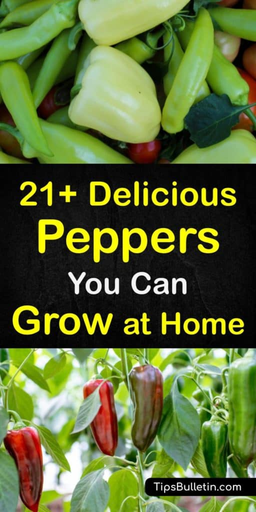 Discover all the different types of peppers, from sweet peppers to hot peppers, and how to grow them. The Anaheim pepper has mild heat and flavor, and the jalapeño pepper has medium heat, while the hottest pepper is the Carolina Reaper. #types #peppers #growing