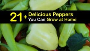 Types of Peppers titleimg1