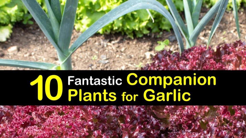 Companion Planting Garlic titleimg1