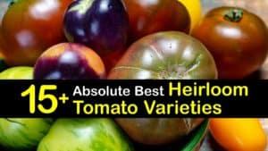 Heirloom Tomato Varieties titleimg1