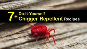 Homemade Chigger Repellent titleimg1