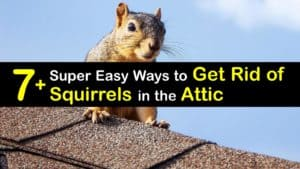 How to Get Rid of Squirrels titleimg1