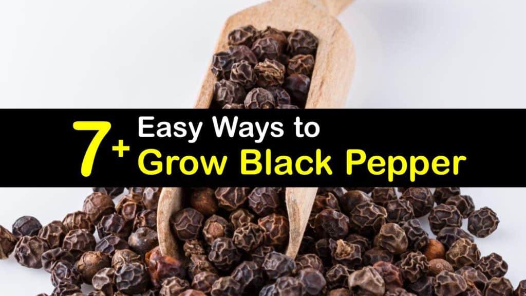 How to Grow Black Pepper titleimg1