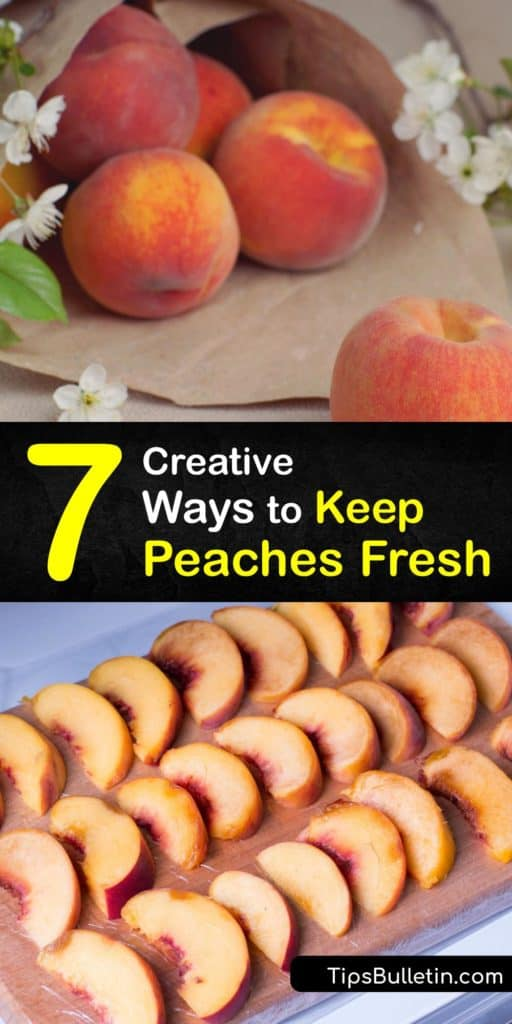 Learn the ripening process of peaches, how to freeze peaches, and how to store-peaches. Keep your peaches out of room temperature. Sprinkle lemon juice on slices before you freeze peaches. Maintain the ripeness of the fruit by storing them in freezer bags before refrigerating. #keep #peaches #fresh