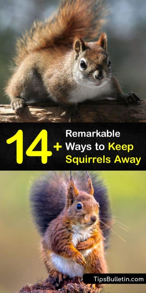 Make a quick run to your local hardware store and pick up some mulch, birdseed, sprinklers, safflower seeds, and chicken wire in order to make homemade squirrel repellent. These ideas for homemade pest control keep critters at a distance without hiring an exterminator. #keep #squirrels #away