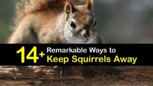 How to Keep Squirrels Away titleimg1