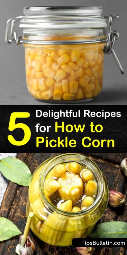 Discover recipes for how to pickle fresh corn with simple steps like cooking ears of corn in a large pot of boiling water, rinsing corn under cold water, and storing jars in a cool place. Enhance your pickled corn with a bay leaf, jalapeño peppers, or black peppercorns. #corn #howto #pickled
