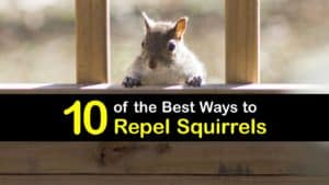 How to Repel Squirrels titleimg1