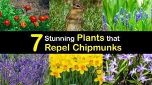 Plants that Repel Chipmunks titleimg1