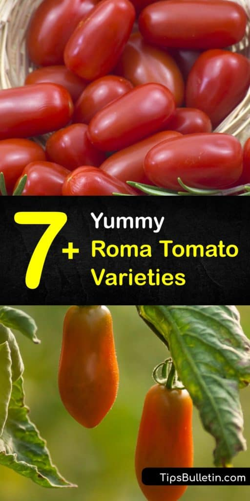 Learn the differences between Italian Roma or plum tomatoes, such as the Martino and San Marzano, and how to grow them in your garden. Roma tomatoes are meatier and larger than the cherry tomato and produce high yields at the end of the growing season. #types #roma #tomatoes #varieties