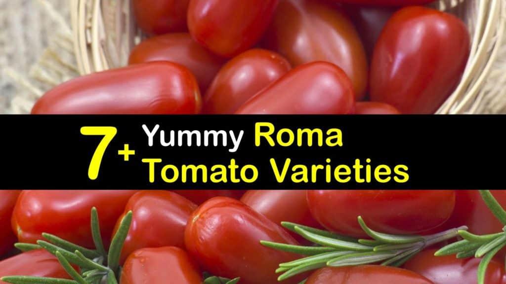 Roma Tomato Varieties titleimg1