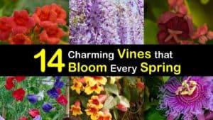 Spring Blooming Vines titleimg1