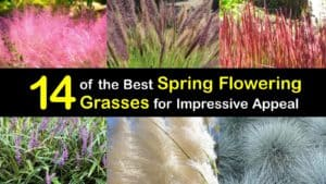 Spring Flowering Grasses titleimg1