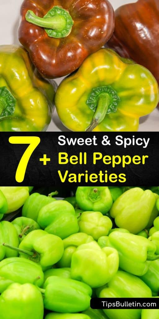 Train your palate to enjoy the heat of a chili pepper by starting with the sweet flavor of green bell peppers, and working through the banana pepper, Italian frying pepper, and the jalapeno. These peppers are packed with vitamin C and have a kick that you can't resist. #types #bell #peppers