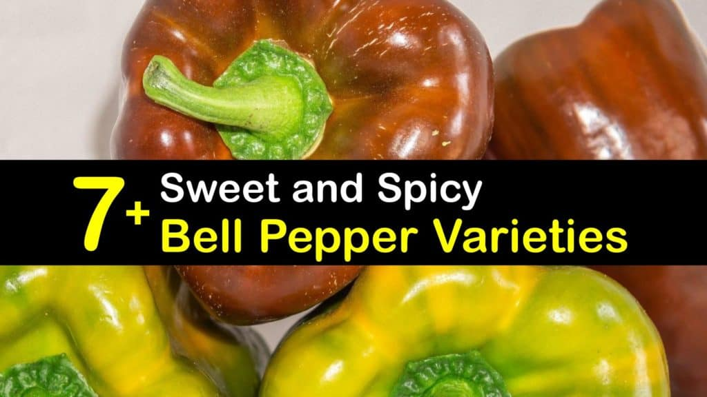 Types of Bell Peppers titleimg1