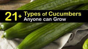 Types of Cucumbers titleimg1