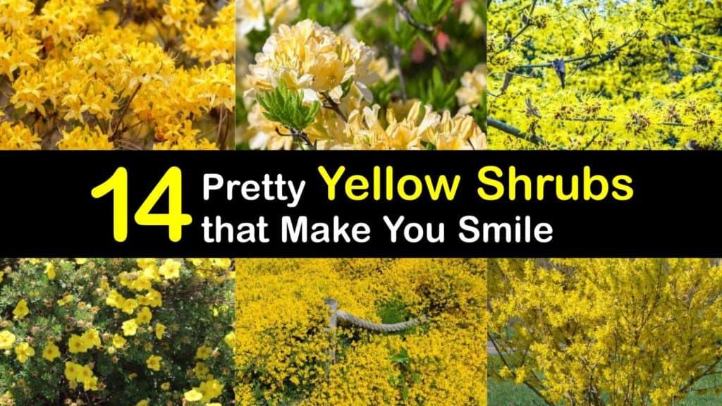 Yellow Shrubs titleimg1