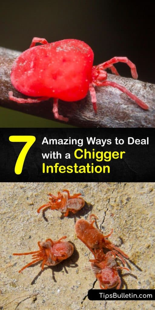 Learn how to control and prevent a chigger infestation around your home and avoid taking antihistamines and covering yourself with calamine lotion to stop the intense itching. Keep your lawn mowed, and apply DEET insect repellent before spending time in the yard. #chigger #infestation #prevent