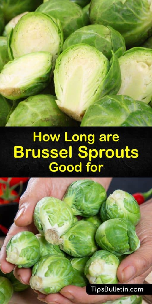 Discover how to store Brussels sprouts, how long they last, and how to tell if these veggies are bad. These cruciferous vegetables from Belgium are bright green when fresh and store well in a plastic bag or cold water in the crisper drawer of the fridge. #last #brussels #sprouts