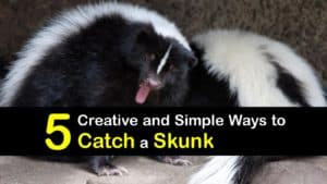 How to Catch a Skunk titleimg1