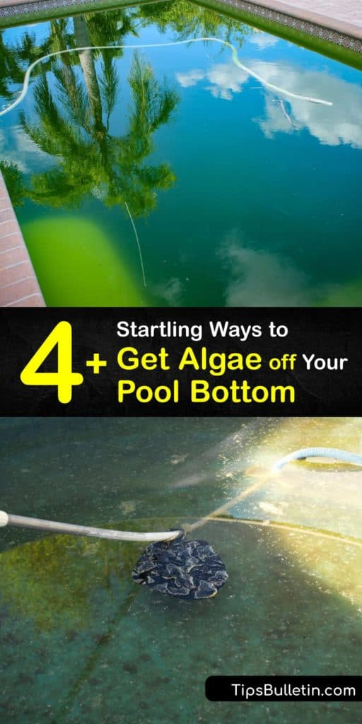 Find out the best ways to get dead algae off the bottom of the pool. Black algae is the hardest to eliminate. Learn the importance of regularly cleaning your pool filter and checking pH, calcium, and chlorine levels to prevent pool algae from developing. #getridof #algae #pool #bottom