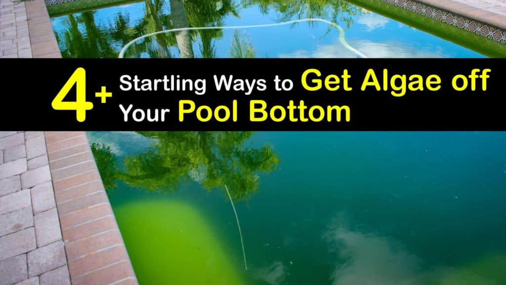 How to Get Algae off Bottom of Your Pool titleimg1