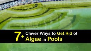 How to Get Rid of Algae in Pools titleimg1