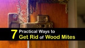 How to Get Rid of Wood Mites titleimg1