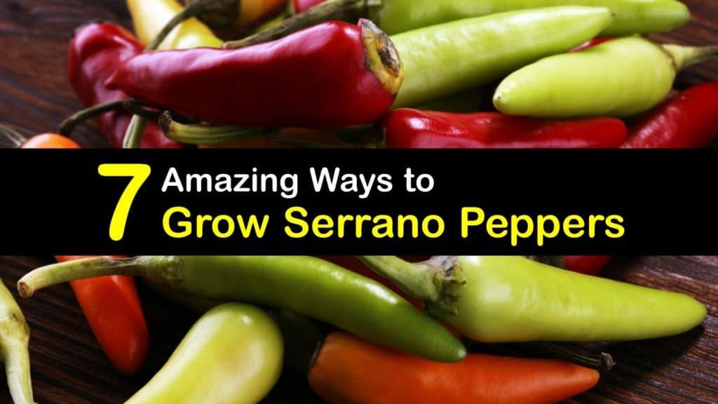 How to Grow Serrano Peppers titleimg1