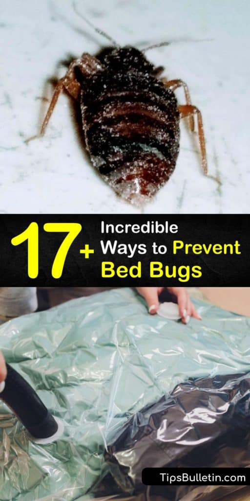 Implement your own pest control techniques with these tips to repel and kill bed bugs. Find their hiding places, learn how to check crevices on bed frames and a headboard, and wrap your mattresses in encasements that keep bed bugs out of your personal space. #howto #prevent #bed #bugs