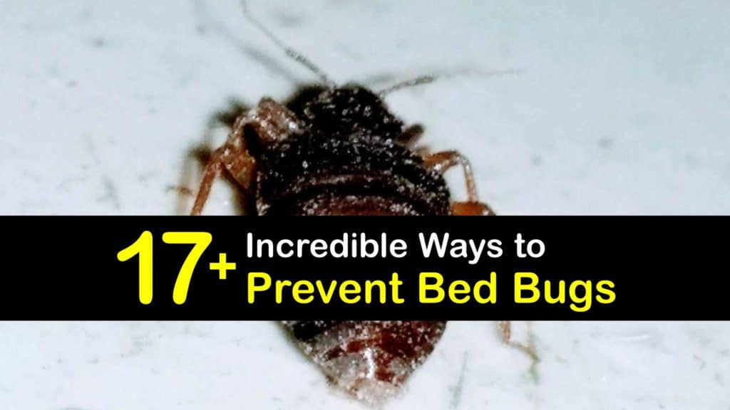 How to Prevent Bed Bugs titleimg1