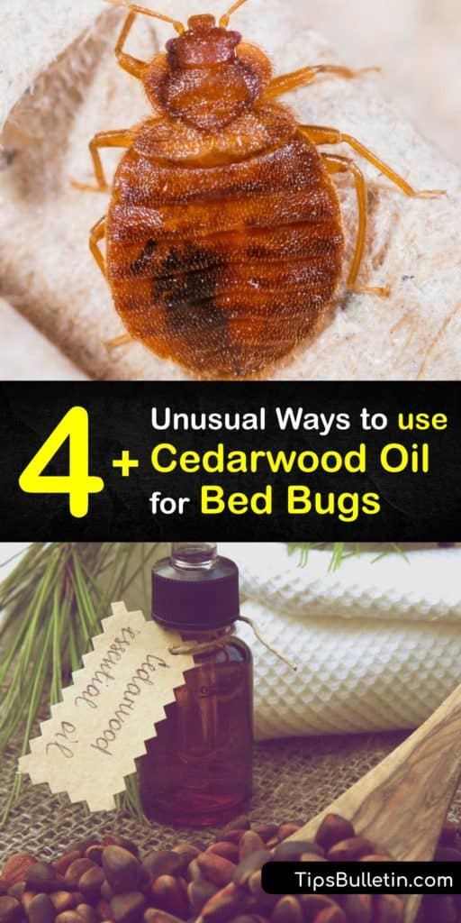Make a bug spray repellent free of insecticides and pesticides to kill bed bugs. Essential oils like cedar, eucalyptus, lemongrass, and peppermint oil help prevent a bed bug infestation. #bedbugs #essentialoil #cedarwood