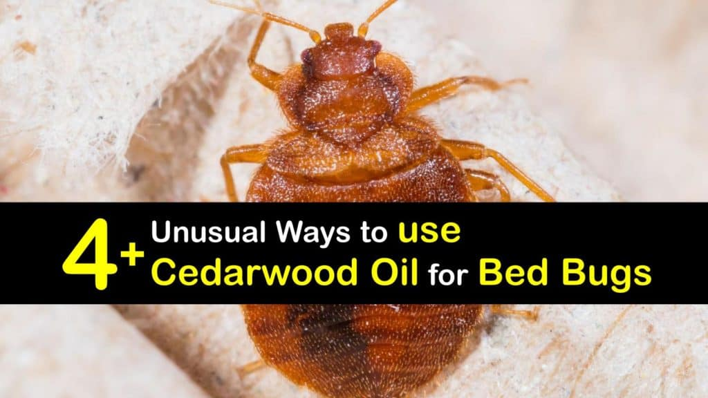 How to use Cedarwood Oil for Bed Bugs titleimg1