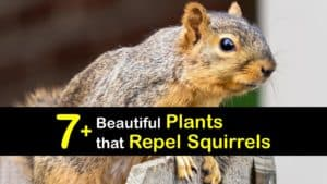 Plants that Repel Squirrels titleimg1