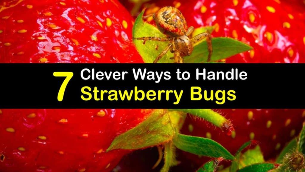Strawberry Bugs titleimg1