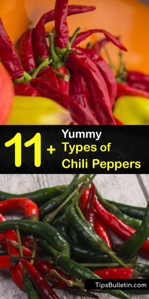 Find out how to use peppers like Caribbean red, ancho, poblano, chipotle, and bell peppers in Mexican and Asian dishes. Most hot chili peppers originated in Mexico because of the ideal environmental conditions. #chili #pepper #varieties #types