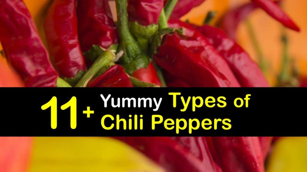 Types of Chili Peppers titleimg1
