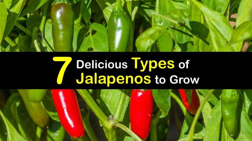 Types of Jalapenos titleimg1